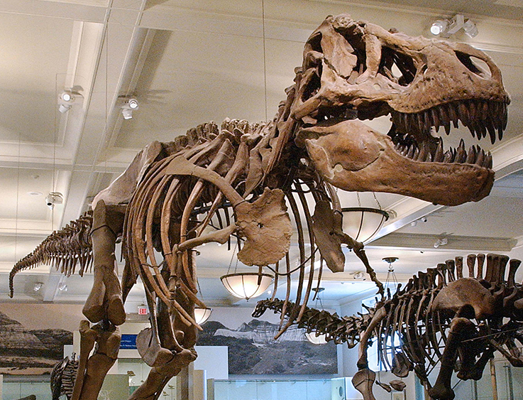 American Museum of Natural History | Things to do in NYC