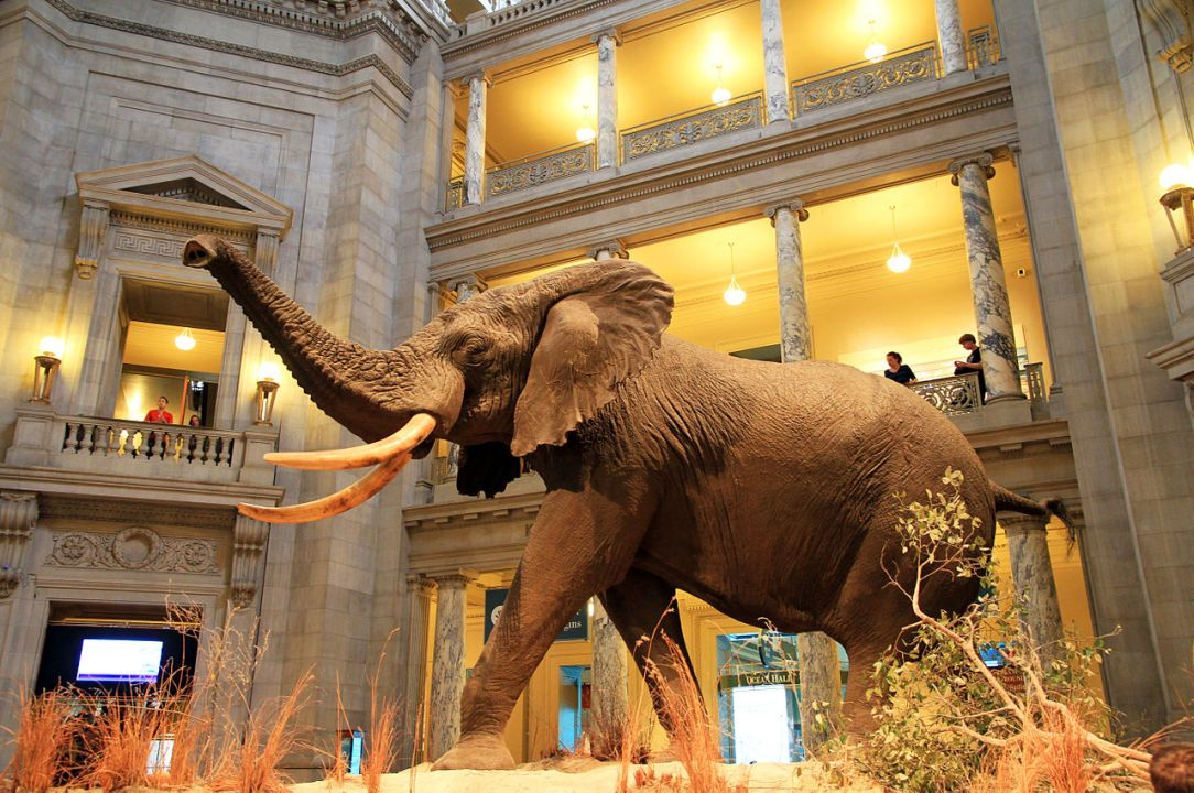 Smithsonian Museum of Natural History | Washington DC Sightseeing